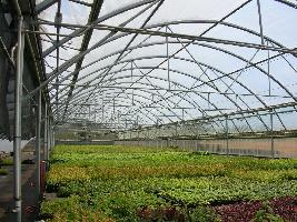 greenhouse from inside with plants.jpg