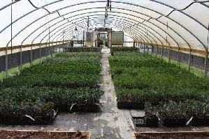 inside greenhouse w plants.jpg